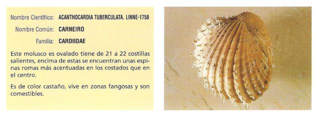 moluscos1
