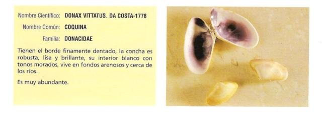 moluscos6